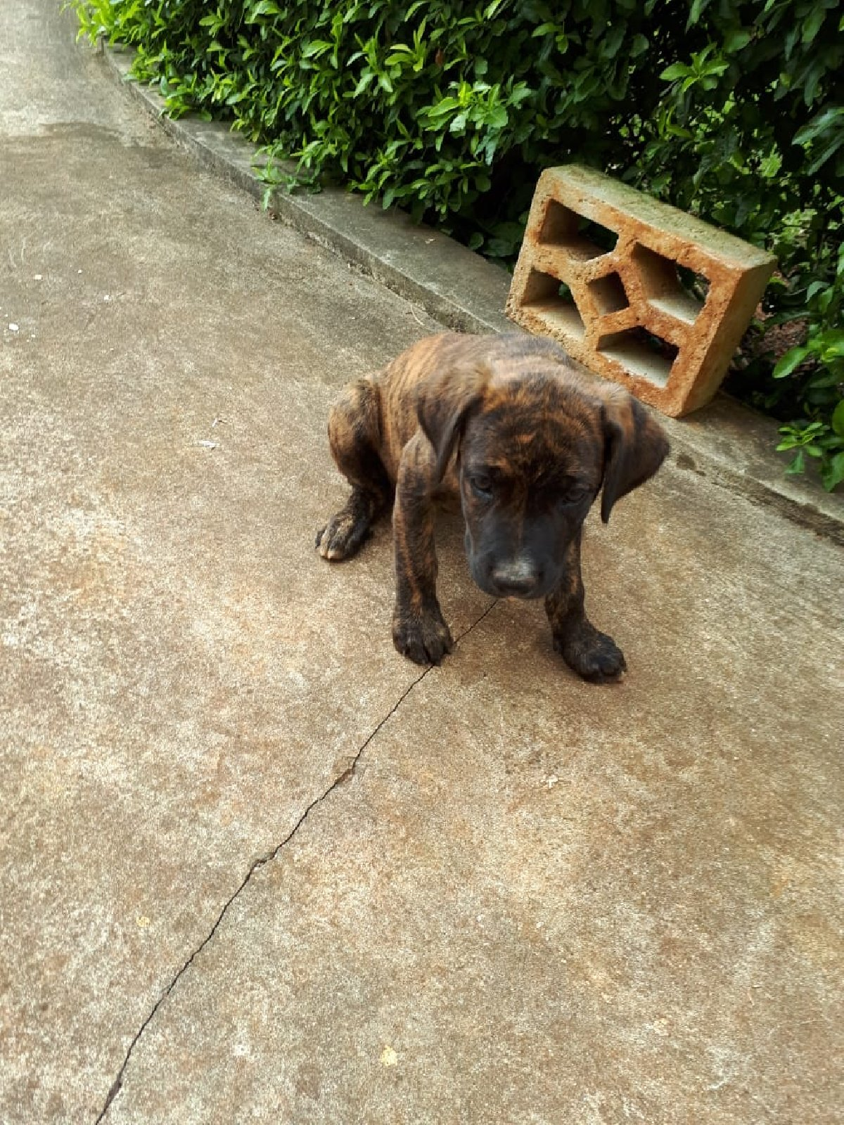Funny Puppies For Sale In Mandeville Jamaica