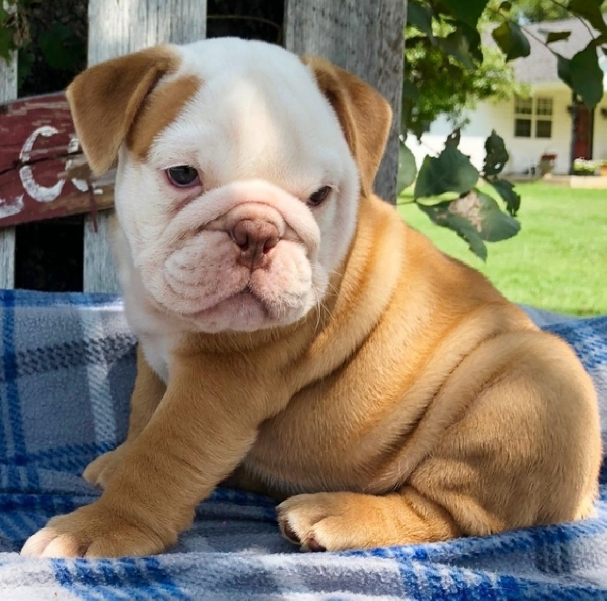 Puppies For Sale Under 400