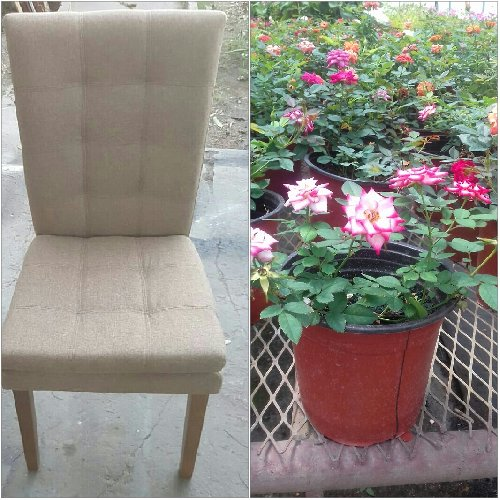 Modern Look Dining Chairs For Sale