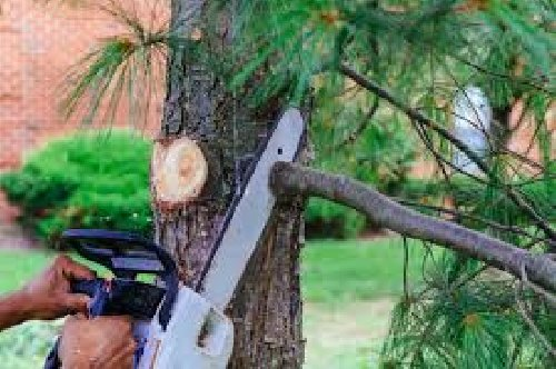 Tree Cutting And Pruning Services