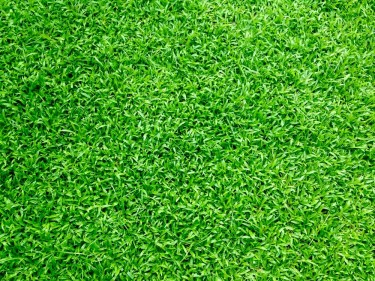 Crab Grass For Sale