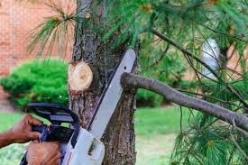 Tree Cutting And Trees Pruning Services
