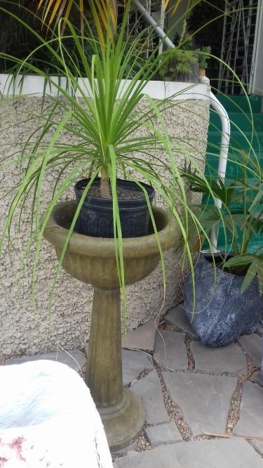 Beautiful Pedestal Planter For Sale