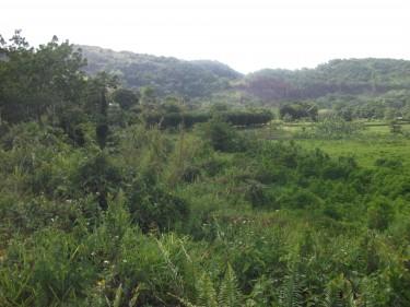 305 Acres Farm Land Mammee Ridge St. Ann