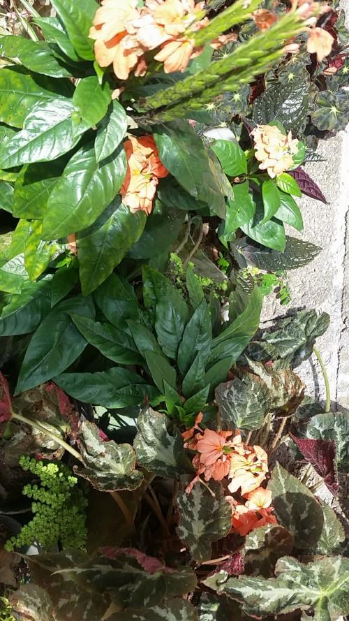 Decorative Flowers