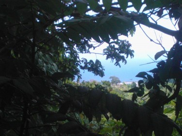 1/4 Acre Ocean View Lot With Approval For A House  Land Hamstead - Ocho Rios