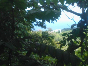 1/4 Acre Ocean View Lot With Approval For A House