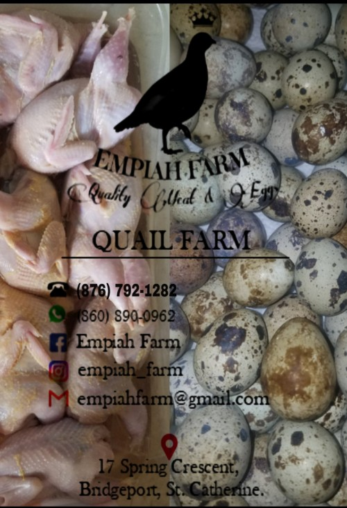 Quality Quail Meat And Eggs