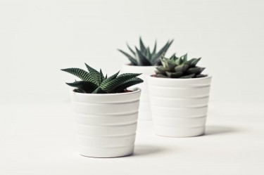 Beautify Your Home With Gorgeous Plants