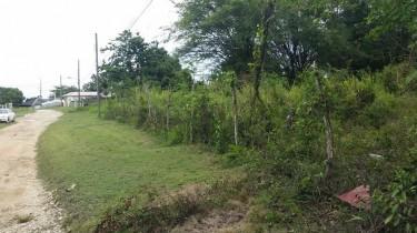 Beautiful 1/4 + Acre Land