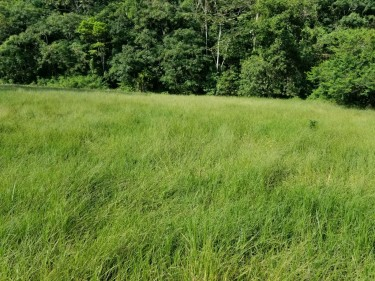 5 Acres Of Land