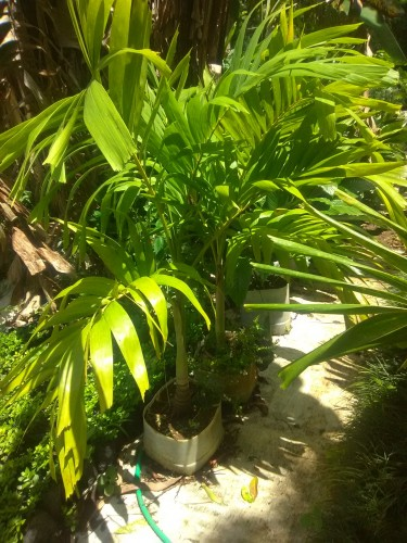Yard ñ Landscaping Plants