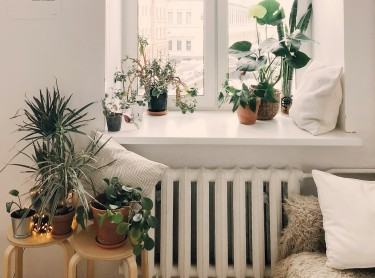 Decorate Your Home With Plants Today