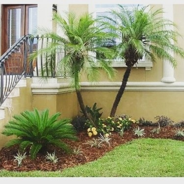 Landscape  Your Home Today
