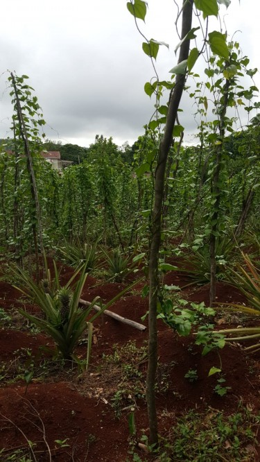 Richfieldsfarmja