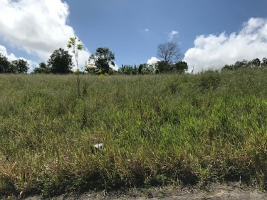 Gently Sloping 3/4 Acre In Newark Spur Tree