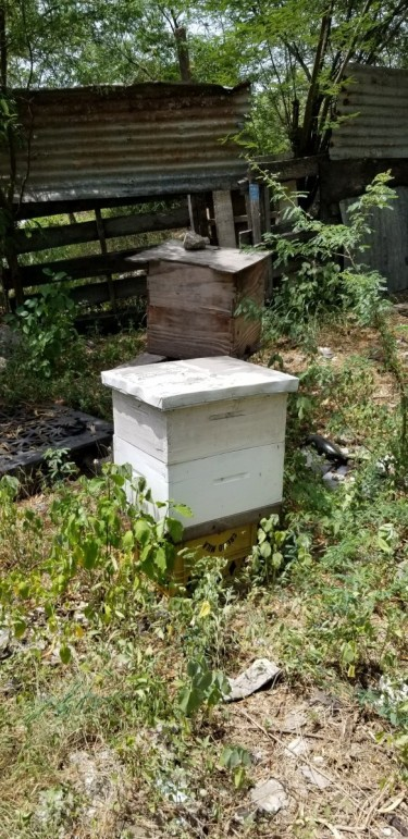 4 Bee Hives Plus Supra And Other Bee Equipment