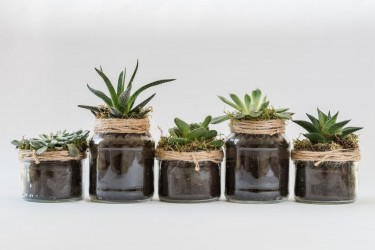 Decor Your Home With Beautiful Plants And Pots