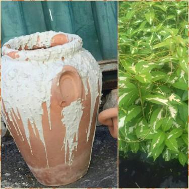 Beautiful Earthenware Jars For Sale