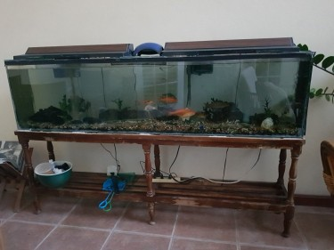 One 7 Ft. Fresh Water Aquarium W. Fish And Stand