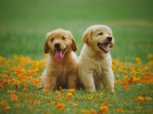 Pretty Puppy's