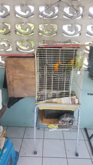 Mature Pair Of Suncunors Alone With Cage And Box