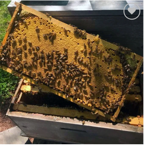 Box Of Honey Bees (nuke Box)
