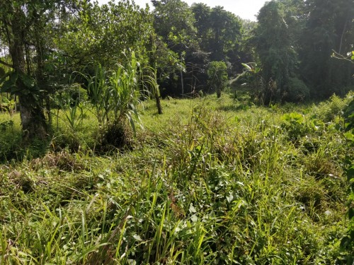 1 ¼  Acre Of Land