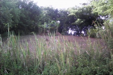 Residential Lot- 302.71 Sq. Mt
