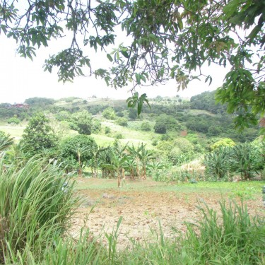 4 Acres Of Land