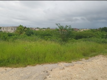 1/4 Acre Land In Mineral Heights