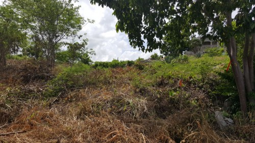 Land For Sale At Twin Palm Estates