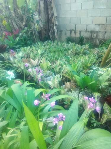 Yard Plants  House Plants Landscaping Plants