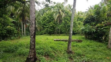 Over 15 Acres Land, Fontabelle, St. Mary
