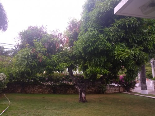 7 Bedroom Bungalow House For Sale- Coral Gardens