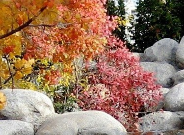 BEAUTIFUL WHITE BOULDERS FOR SALE