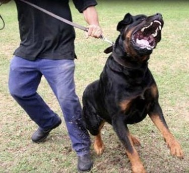 Dog Attack And Obedience Training Services