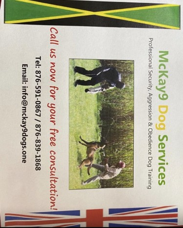 Dog Attack And Obedience Training Services  Dogs St James