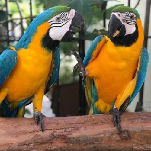 Parrots For Adoption WhatsApp +15102101065