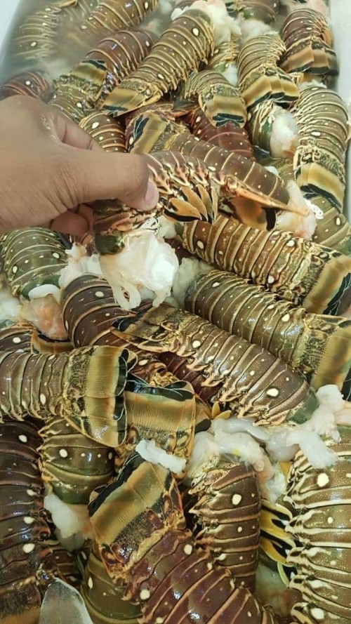Lobsters For Sale Order Yours Now!!!