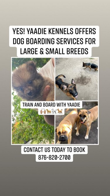 DOG BOARDING FOR SMALL AND LARGE BREED DOGS