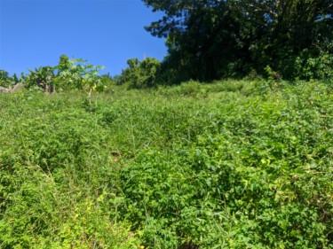 Over 1/4 Acre Lot Near Mandeville