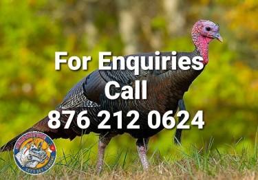 Turkeys For Sale (Per Pair)