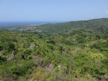 103 Acres Of Development Land In St. Ann