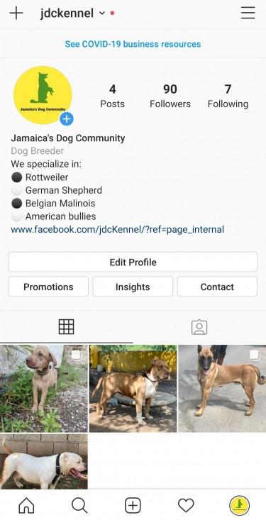 Follow Us On IG : Jamaica's Dog Community