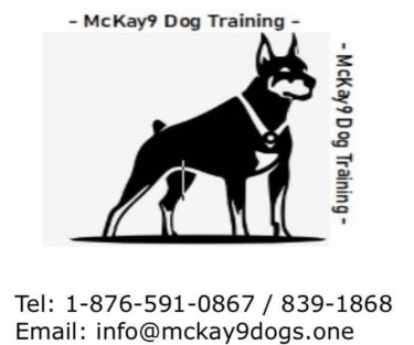McKay9 Dog Training Services  Dogs Montego Bay