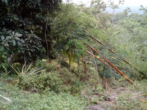 Land For Purchase, 6m Per Acre
