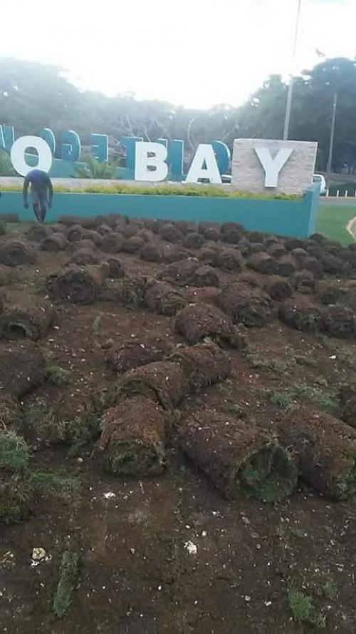 Sod/Turf Zoysia And Crabgrass