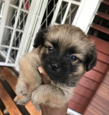 Puppies For Sale! Available On 24Dec 2020