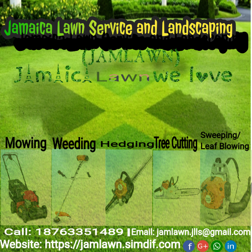 Need Tree Cutting? Give Us A Call